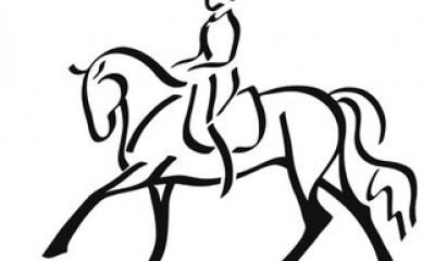 Молодая выездковая лошадь