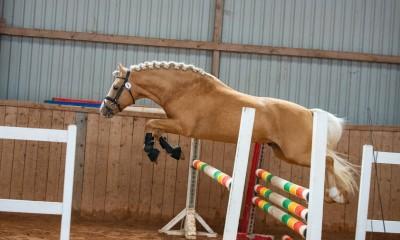 Eesti hobune Ten