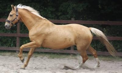 tiine mära