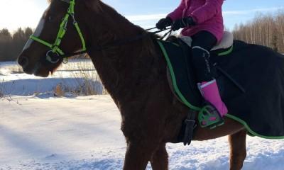 16a. Leedu hobune