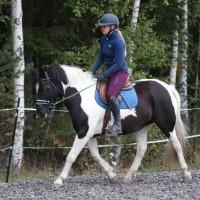 Eestihobune (poni)