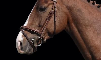 Pony 1.48mtr