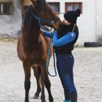 2 aastane mära